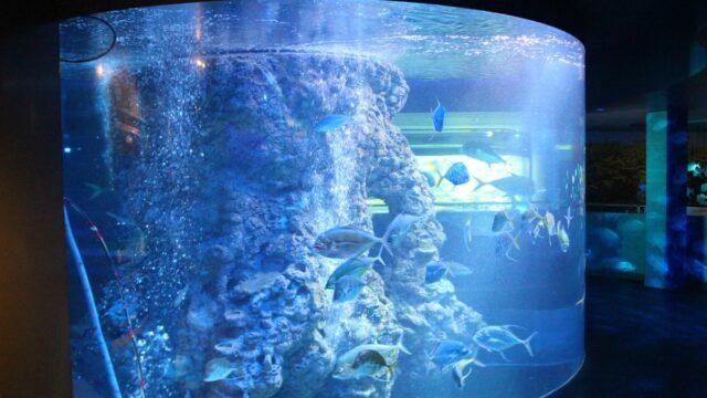 水族館の見どころ