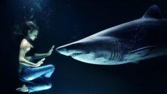 深海に住む「サメ」